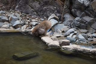 16.03.25温泉を呑む猿.JPG