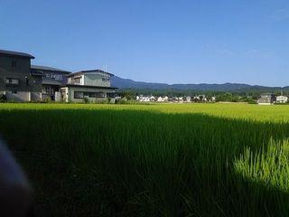 18.08.04稲作.jpg