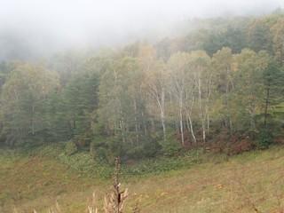 18.10.04霧の紅葉.JPG