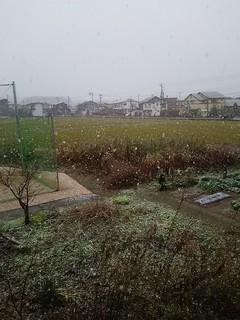 18.12.08初雪.JPG