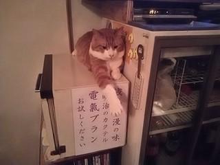 19.03.12ぷーちゃん.JPG