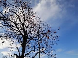 19.11.22晩秋の柿の木.JPG