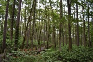 20.08.18森林浴.JPG